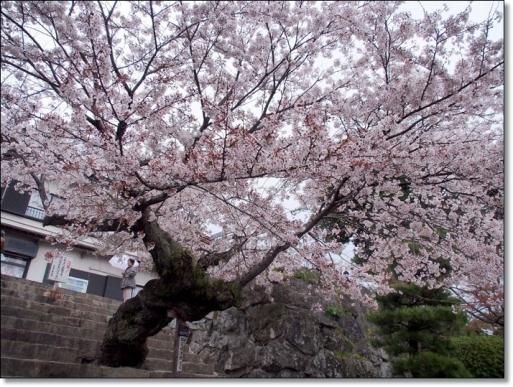iwakuni20140405-4