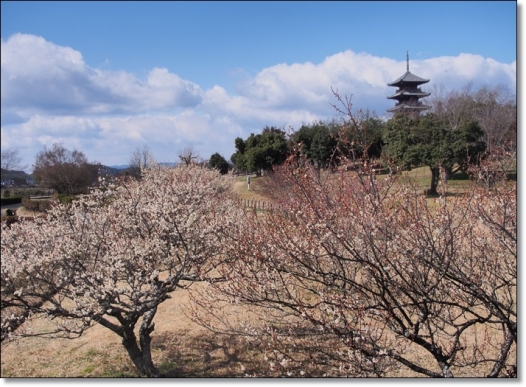 kokubunzi0206-1