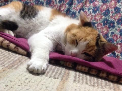 猫のオリンピック観戦2