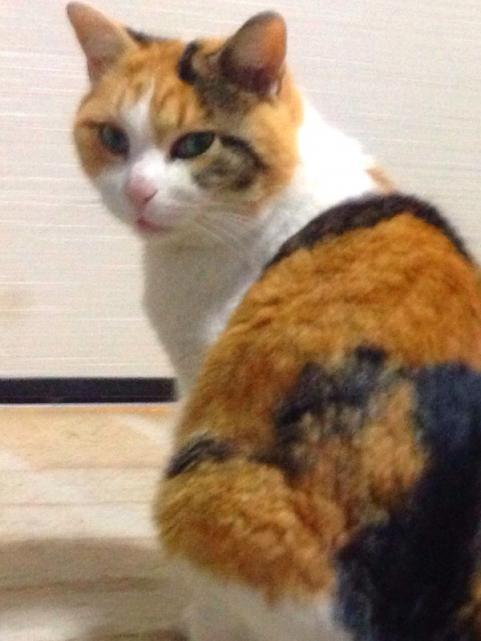 猫の日2014a