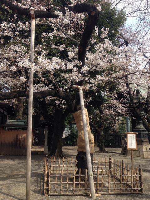 靖国神社2014さくらまつり5