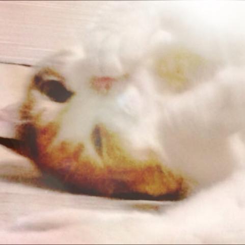 弁天猫SP版6