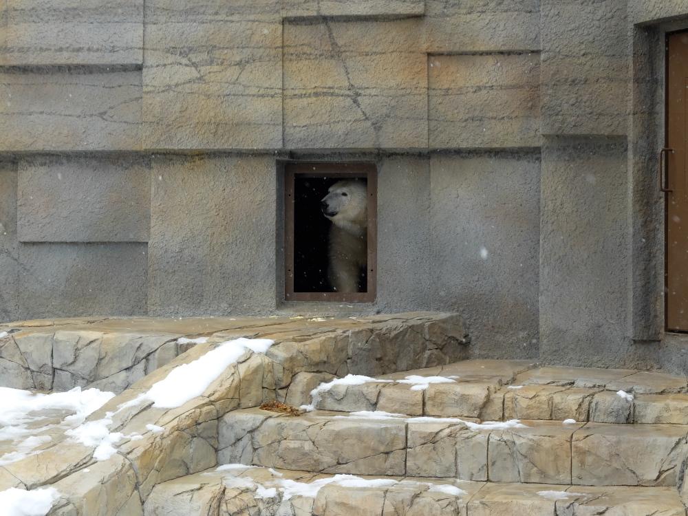 丸山動物園05