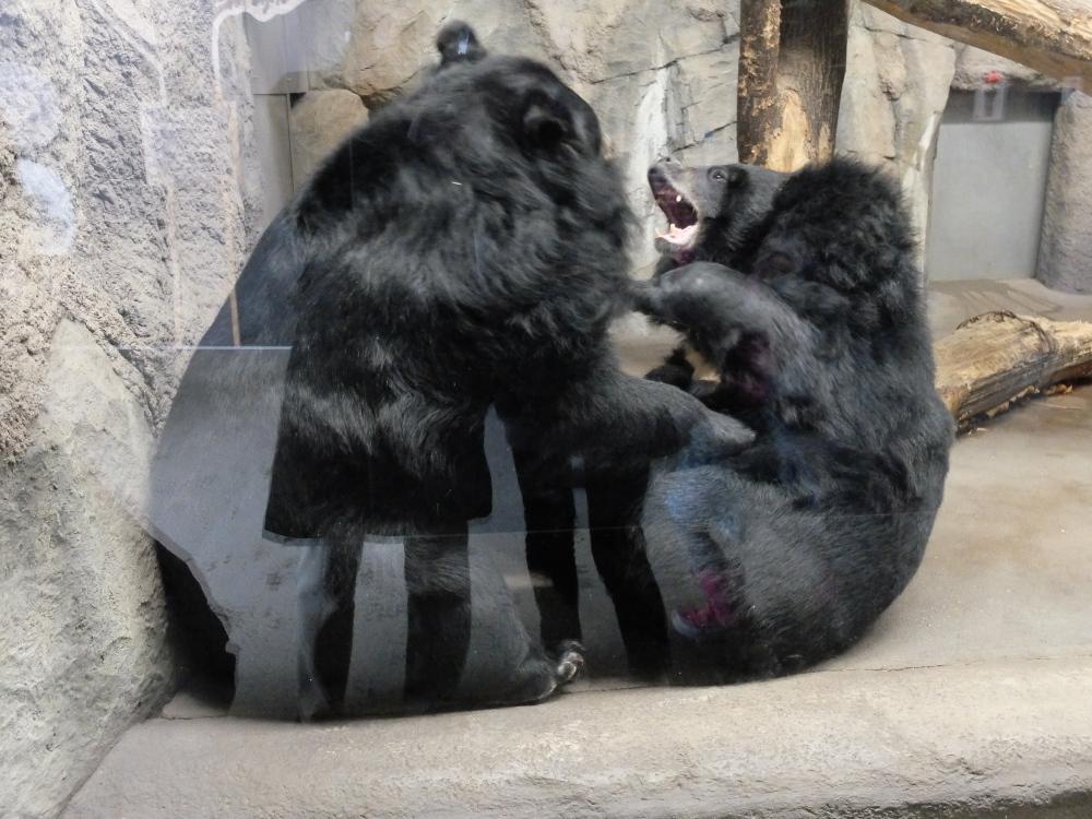 丸山動物園02