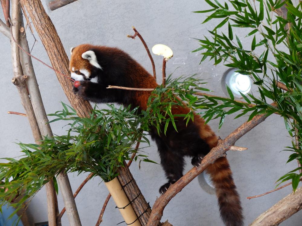 丸山動物園03