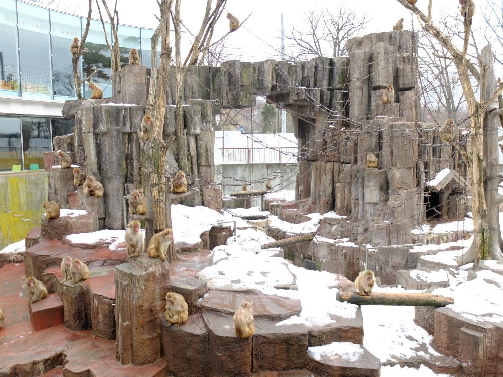 丸山動物園06