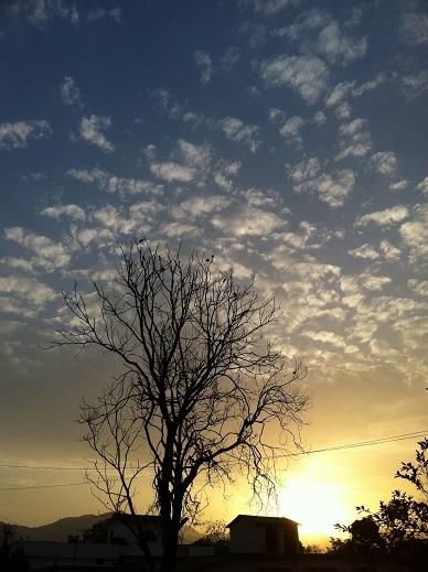 大木の夜明け縦