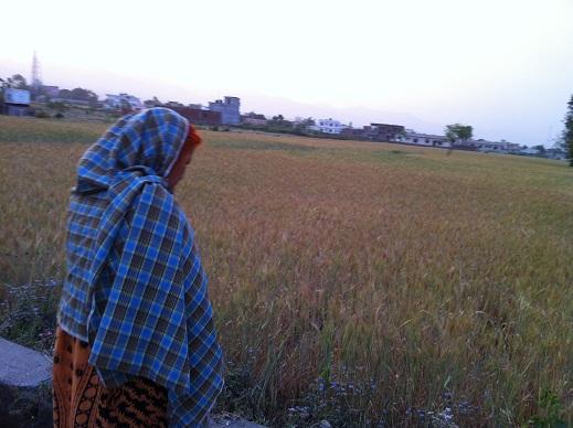 小麦畑(ATTR)
