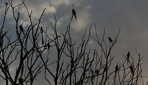 大木のの夜明けオオム 拡大