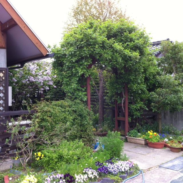 沙羅ガーデン