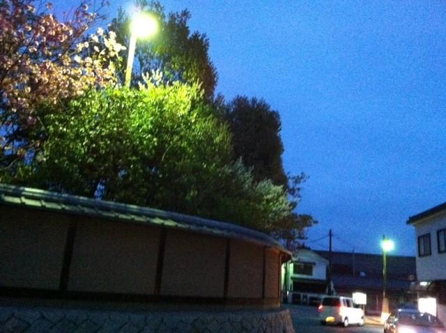 八重桜賀茂鶴 4