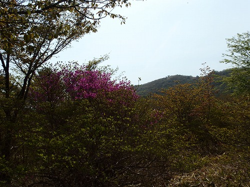 20140524_nabewariyama-033