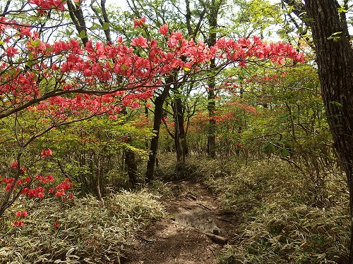 20140524_nabewariyama-036