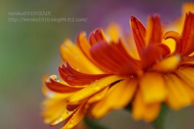 2014-02-21オレンジの花