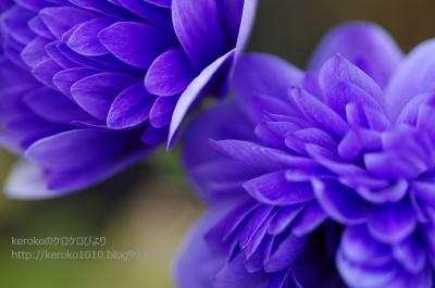 2014-02-21紫の花