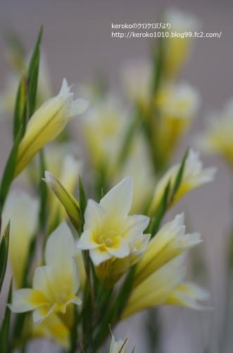 2014-04-21みずの森白い花