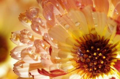 2014-04-03みずの森オレンジの花