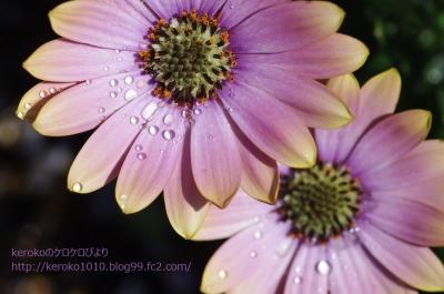 2014-04-03みずの森ピンクの花