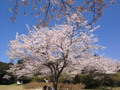 鏡山DEお花見 013