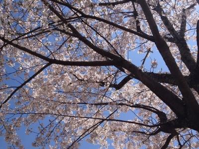 鏡山DEお花見 006