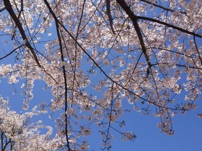鏡山DEお花見 011