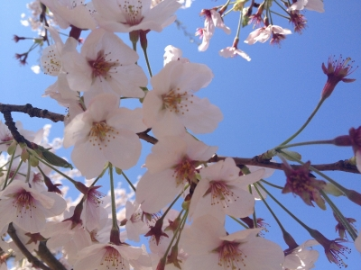 鏡山DEお花見 014
