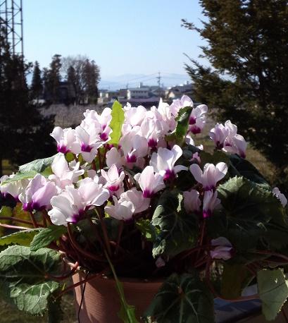 春待つ花 (2)
