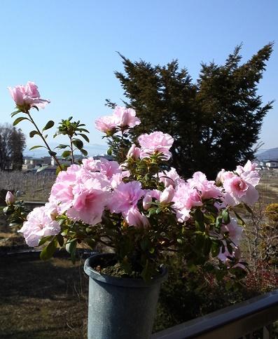 春待つ花 (3)