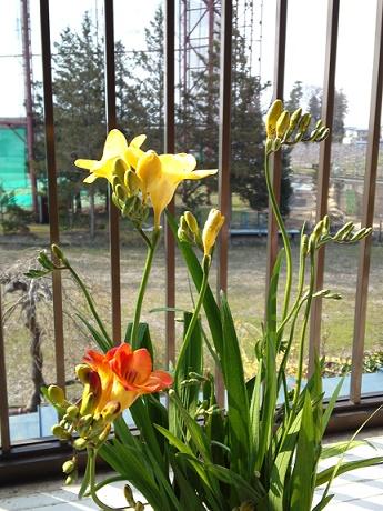 春の鍵盤 (3)