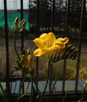 春の鍵盤 (4)