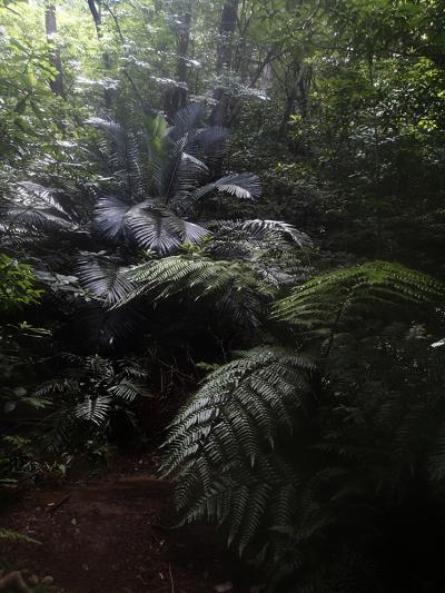 14西表島ジャングル1_convert_20140710225025