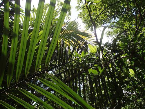 14西表島ジャングル3_convert_20140710224950