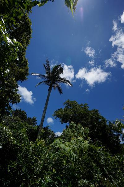 14西表島ジャングル4_convert_20140710224926