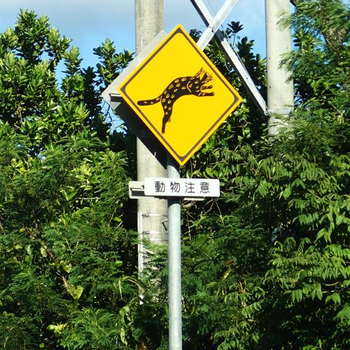 西表島動物注意_convert_20140718213602