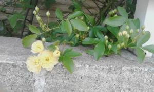 spring-2014-006