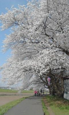spring-2014-005