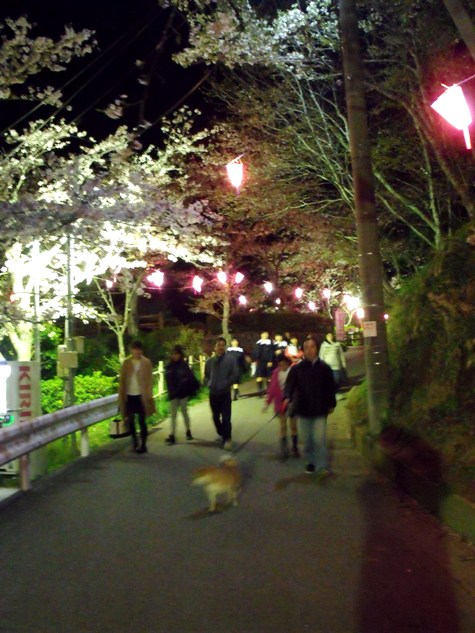 画像ー214夜桜 019-2