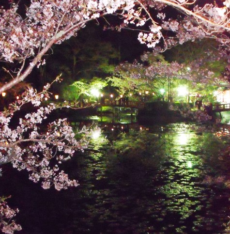 画像ー214夜桜 027-2