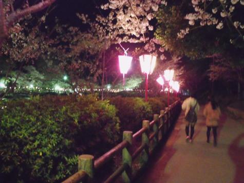 画像ー214夜桜 022-2