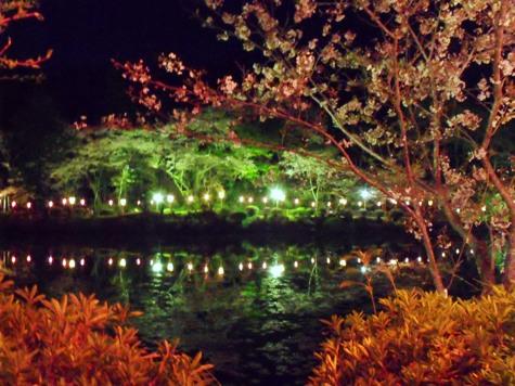 画像ー214夜桜 023-2