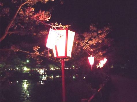 画像ー214夜桜 025-2