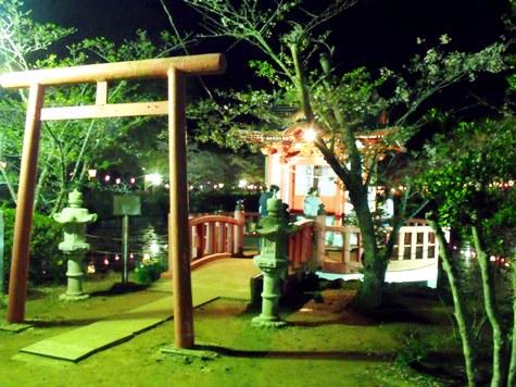 画像ー214夜桜 034-2