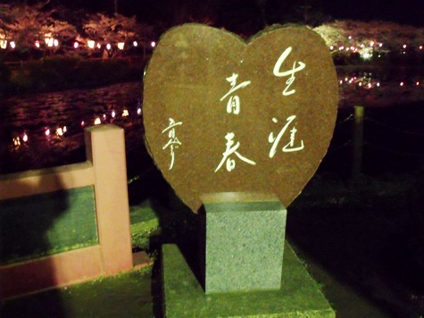 画像ー214夜桜 033-2