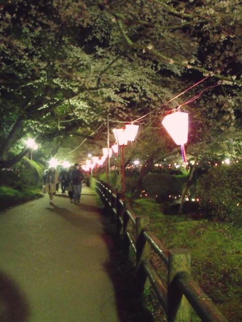 画像ー214夜桜 038-2