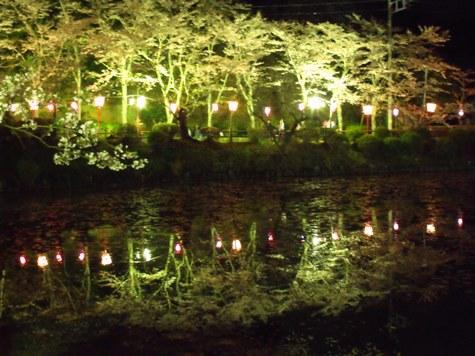 画像ー214夜桜 043-2
