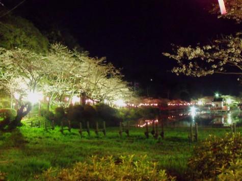 画像ー214夜桜 047-2