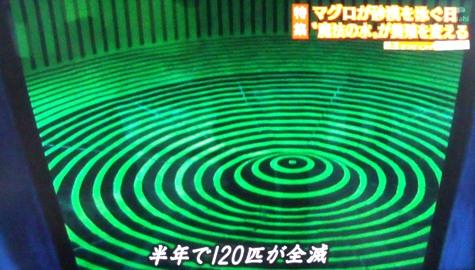 画像ー217好調環境 068-2