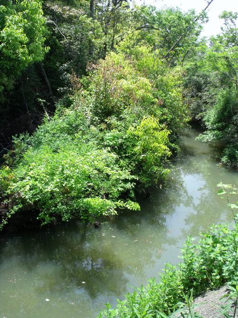画像ー222初夏の庭の風景 039-2