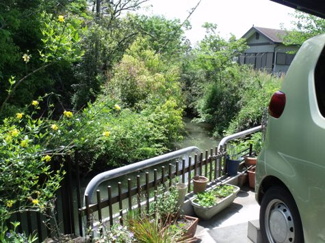 画像ー222初夏の庭の風景 030-2