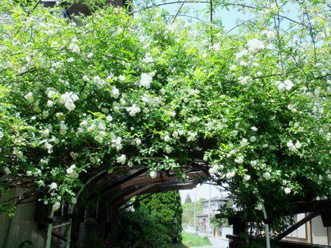 画像ー222初夏の庭の風景 005-2